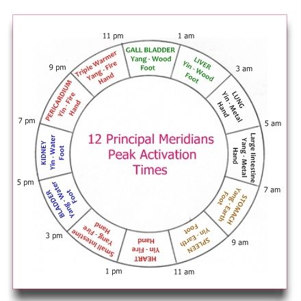 The Chinese Meridian Clock, or Horary Cycle shows peak activation times for the 12 meridians