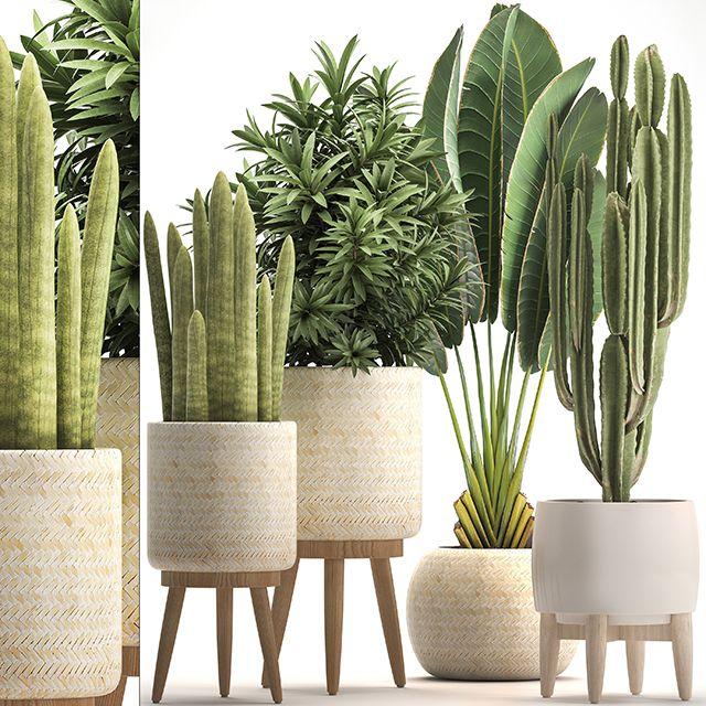 3d Plants Model 350 Free Download Plant Decor Indoor Sketchup Free Sketchup Model