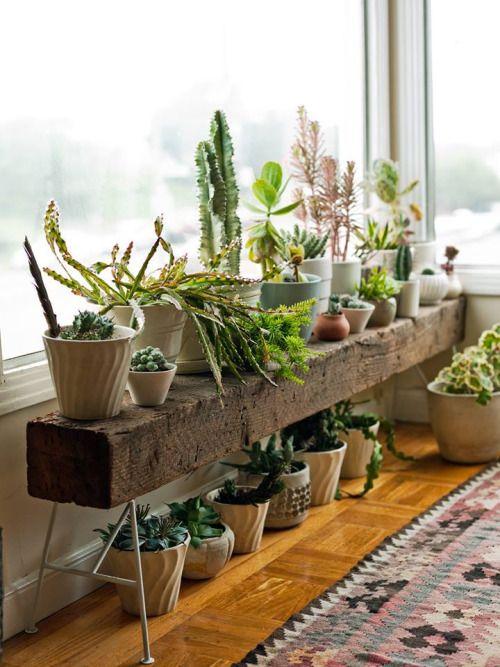 Tablette pour plantes devant grande fenêtre
