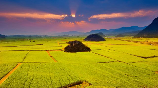 "The ""Golden Sea"" of canola flowers, Luoping (Yunnan, China). Vast farmlands of rich yellow-green rapeseed (canola) flowers, blooming February-March, ending in June."