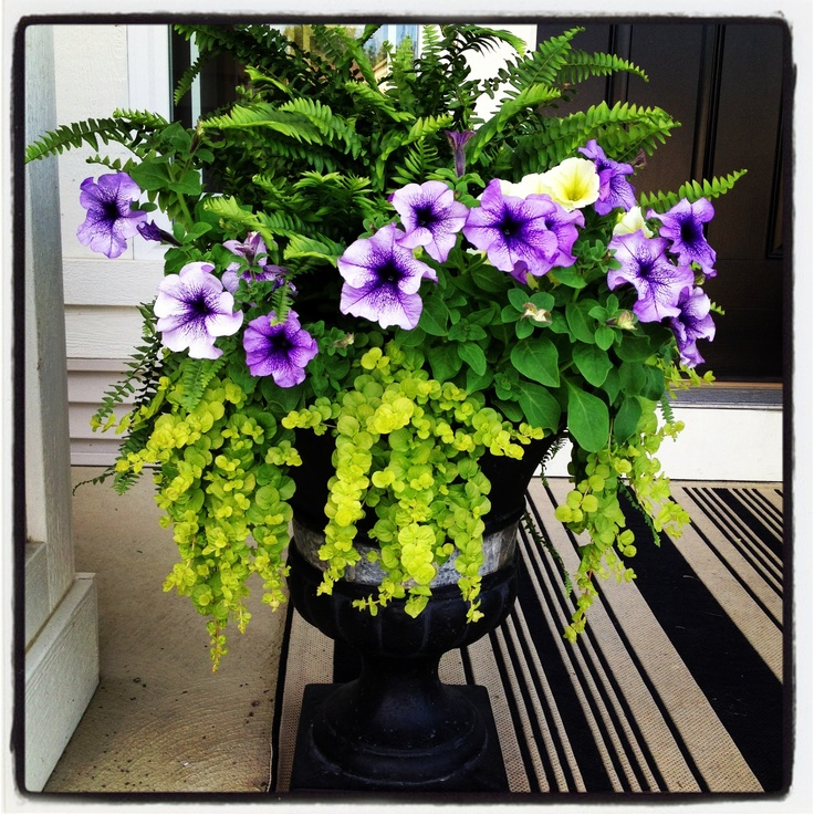45 best front porch images on pinterest facades gardening and home ideas - Growing petunias pots balconies porches ...