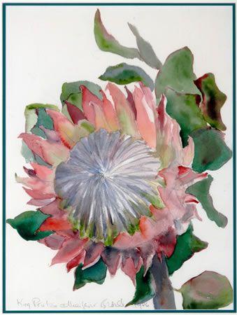 Margaret Bedell: King Protea