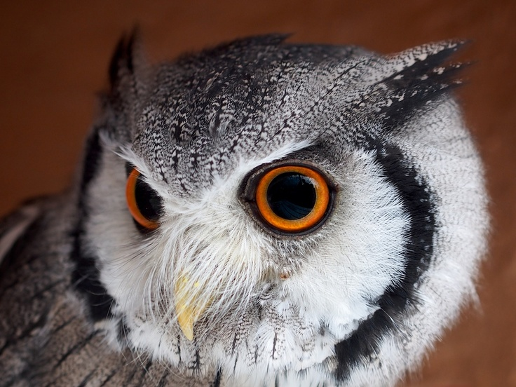 Owl by Rob Rasing, Olympus OM-D E-M5 and M.Zuiko 45mm portrait lens via 500px