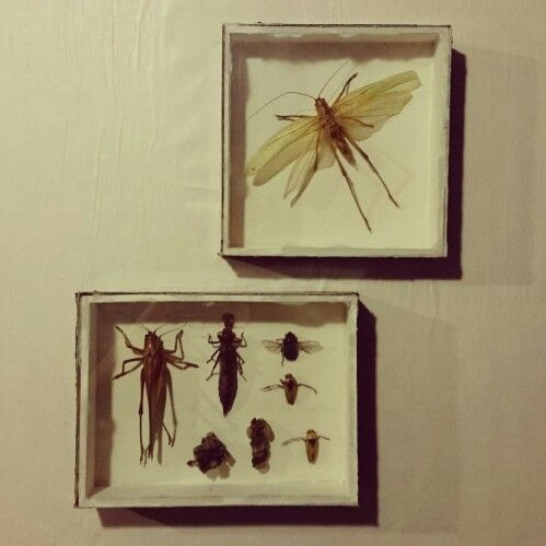 Insect box By: Katrine Svinth