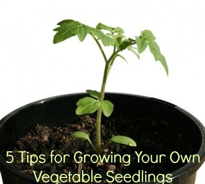 5 Tips for Growing Your Own Vegetable Seedlings