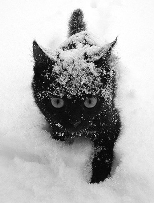 Black kitty in the snow