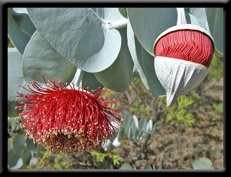 Autumn - Perth Hills - Wildflowers of Western Australia