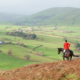 Beautiful view on a horse during a fox hunt