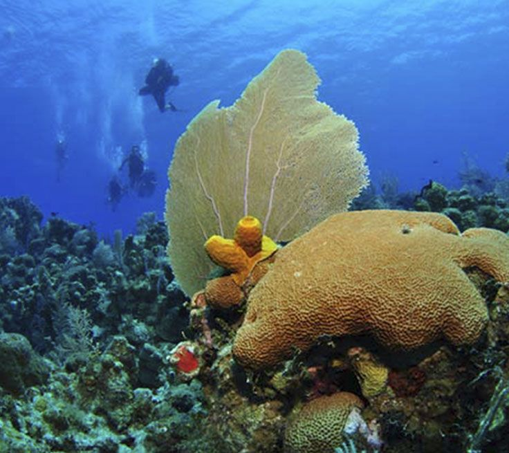 Want to learn to scuba dive on your next cruise? Carnival makes it easy.