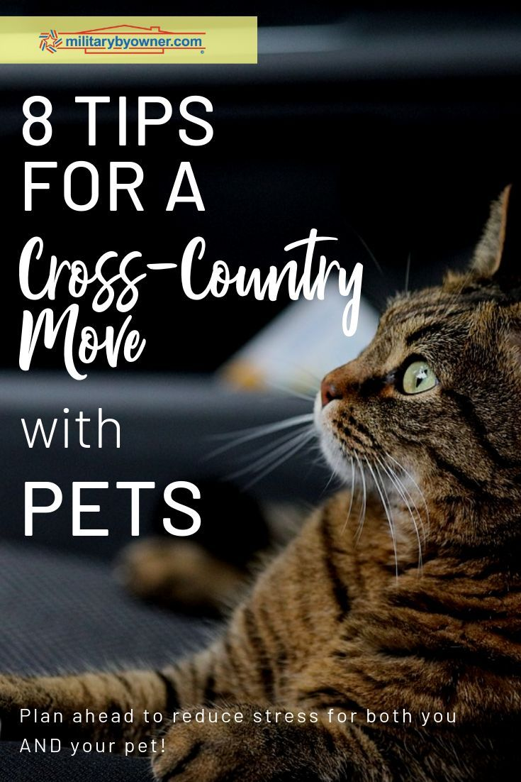 8 Tips For A Cross Country Move With Pets Moving Cross Country Moving Across Country Tips Moving Across Country