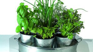 Persil, ciboulette, thym, basilic… Quoi de plus agréable que d'utiliser ses propres aromates dans la cuisine de tout les jours ? Si vous n'avez pas la chance d'avoir un jardin ou un balcon pour cultiver des plantes aromatiques, pas d'inquiétude !