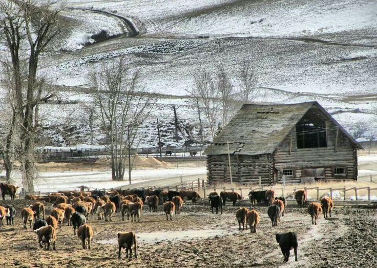 Douglas Lake Ranch! British Columbia, Canada.