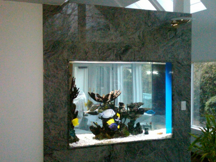 i will have this in my dream home aquarium wall - Fish Tank Designs My Home