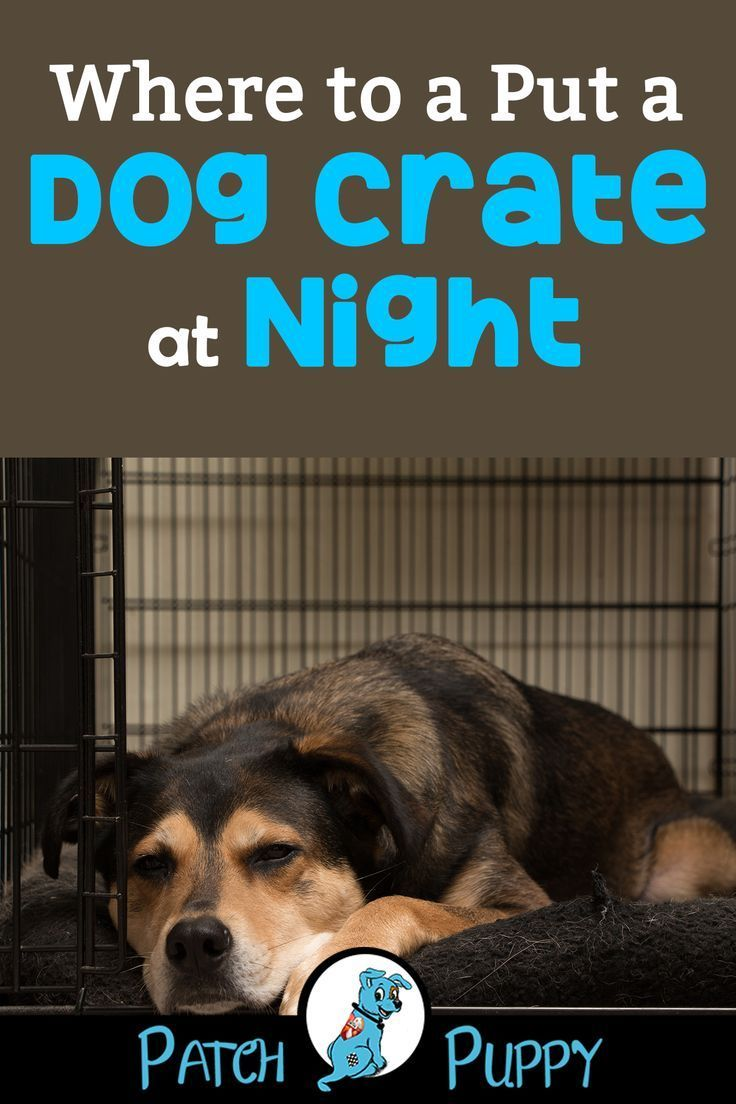 Is It Cruel To Crate A Dog At Night Dog Training Dog Training
