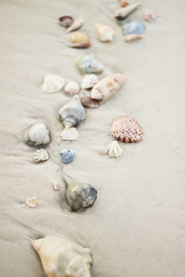 Shells On The Beach Sand N Sea Properties Llc Galveston Tx Sandnseavacation