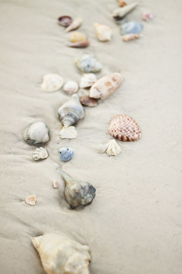 Sea shells at the tide line.