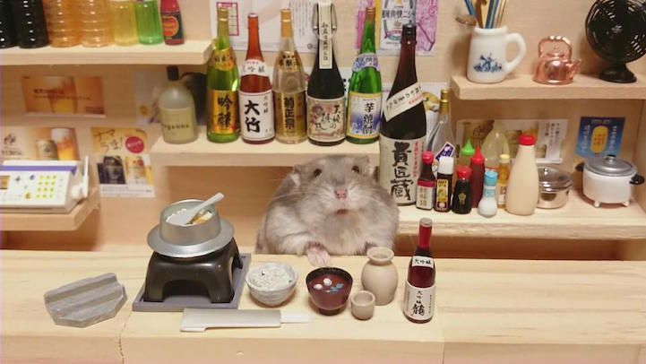 hamsters-bartenders-serving-tiny-food-and-drinks-02