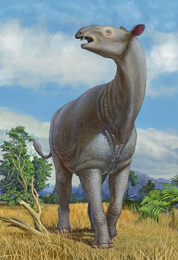 A Lone Paraceratherium Bugtiense by Sergey Krasovskiy ...