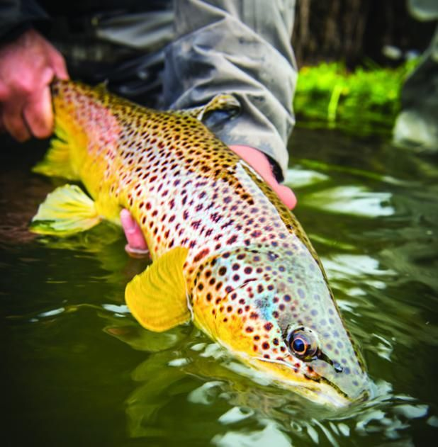 Micro Managing: Tips For Catching Big Trout in the Middle of Summer | Field & Stream