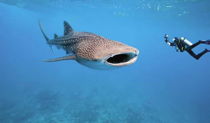 Top 5 Best scuba diving sites in the world from Bikini Atoll to ...