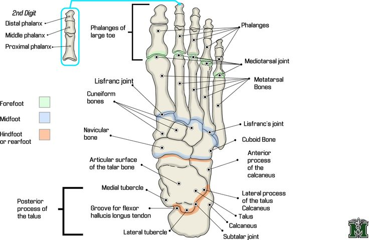 17 best images about documentation for reflexology on pinterest foot anatomy massage therapy. Black Bedroom Furniture Sets. Home Design Ideas