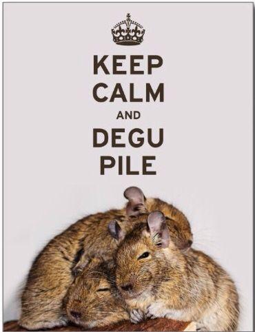 DEGU PILE