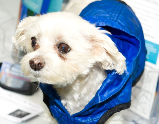 "Lucky Diamond, a little dog with a big mission, dies of cancer. The rescued Maltese earned world record for ""animal photographed with the most famous people."""