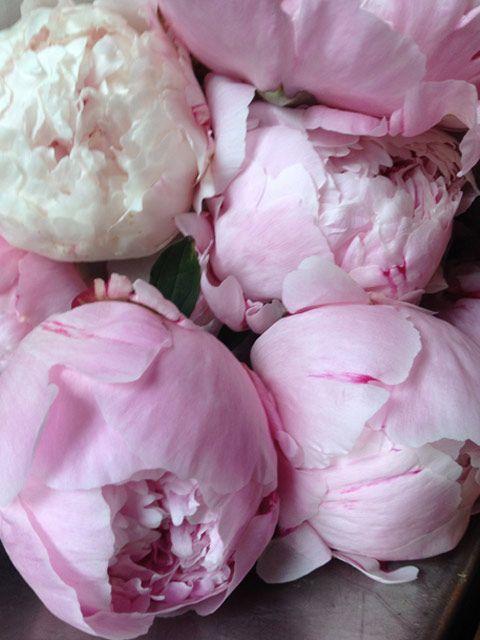 SKAPA i blommor AB »  #Bröllop #blommor