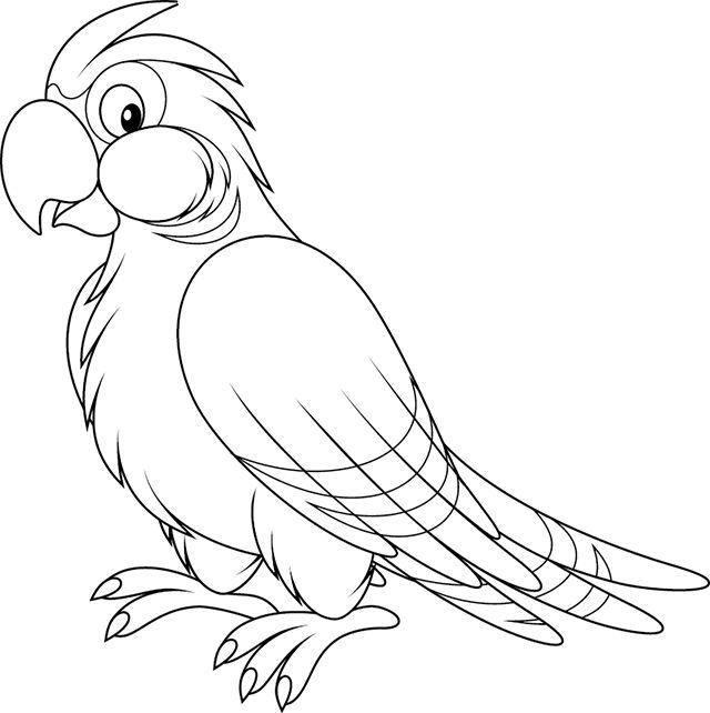 perroquet.png (640×642)   Oiseaux à colorier, Coloriage, Dessin perroquet