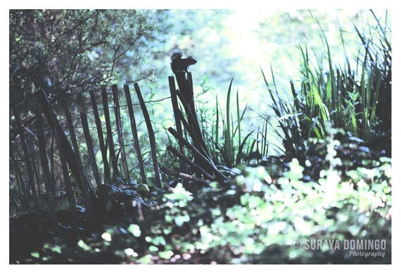 Squirrel on Park Fence Wildlife Nature Creative by SurayaDomingo, £19.95