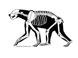 A collection of skeletal drawings of prehistoric animals