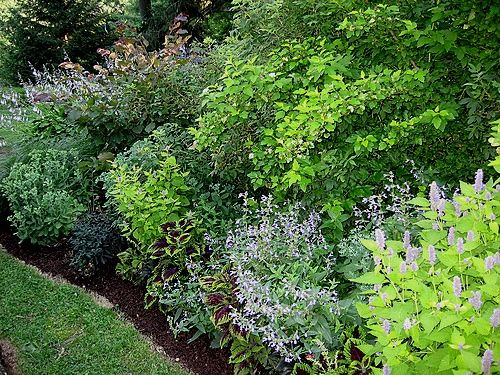 56 best plants images on Pinterest Garden ideas Gardening and