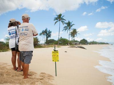 23 Volunteer Ideas in Hawai'i