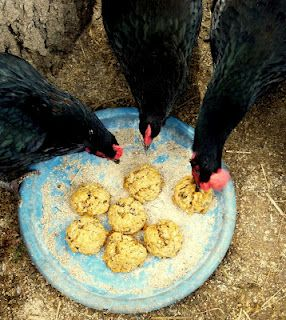 Oatmeal Treat Balls - next time you bake oatmeal cookies, why not whip up a batch for your chickens !