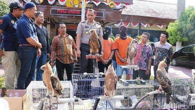 Perdagangan Satwa Liar di Kabupaten Malang Dibongkar Polisi  http://ift.tt/2v2DcEG