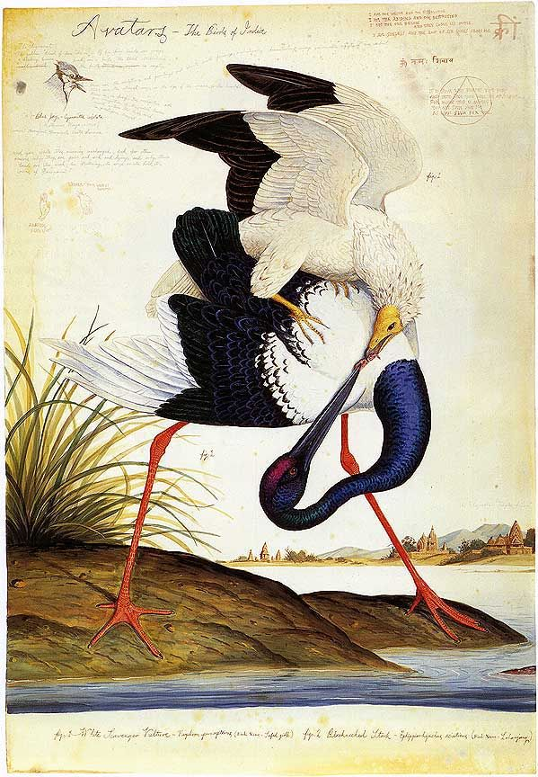 """Painting from """"Avatars - The Birds of India"""" by Walton Ford"""