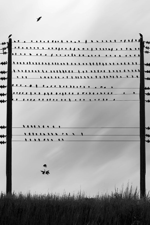 'To Whom It May Concern' / Sherry Akrami