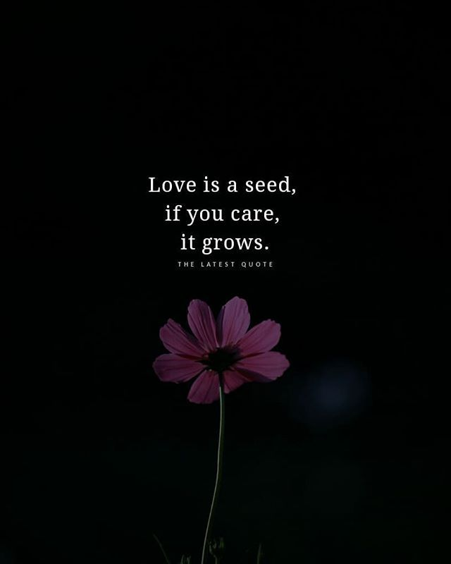 Love Is A Seed If You Care It Grows With Images Too