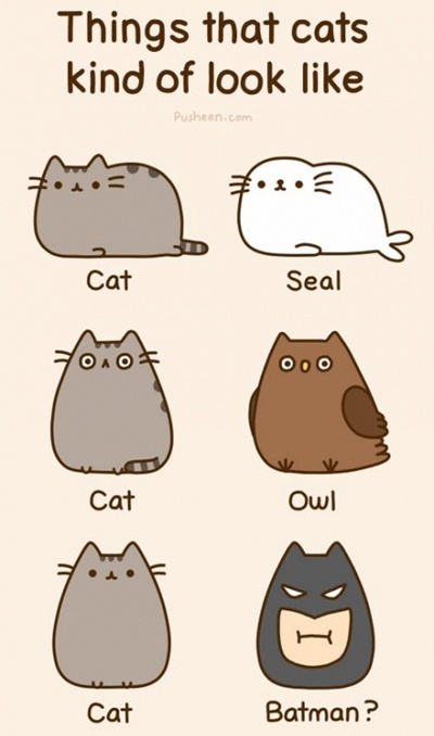 Things that cats kind of look like: Cats Kinda, Animals, Pusheen Cat, Funny Stuff, Batman, Things, Kitty, Cat Lady