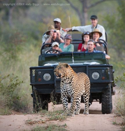 Sabi Sands - I really miss this