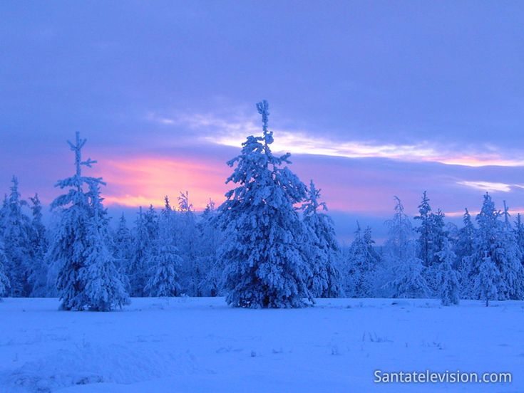 Blue moment in a forest in Rovaniemi in Finnish Lapland