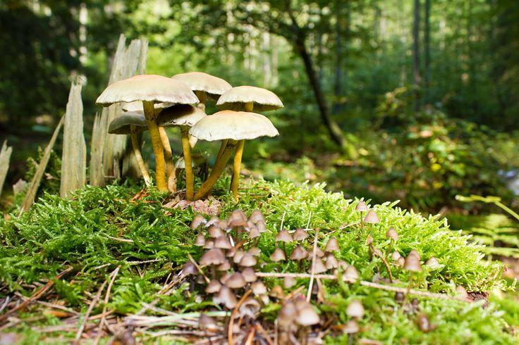 Pilze Waldboden Mildenitztal in Mecklenburg-Vorpommern.