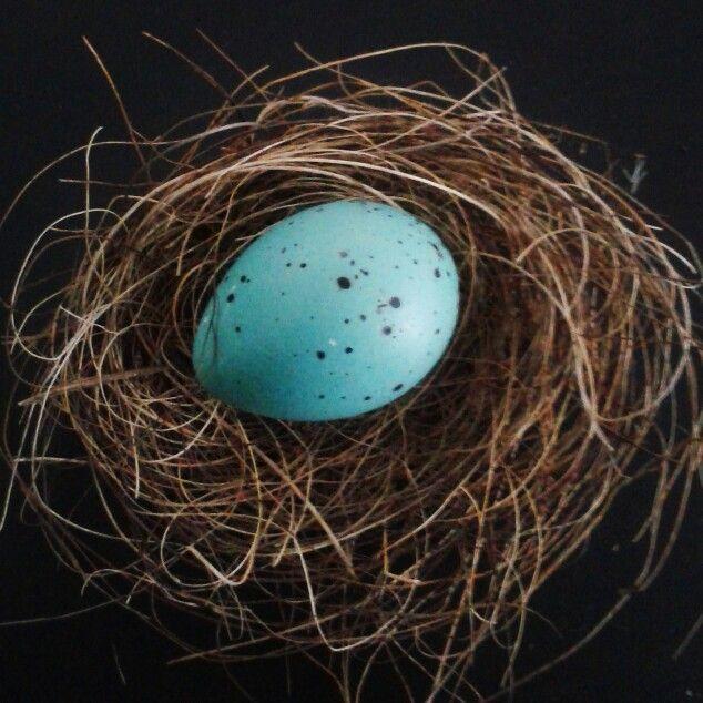 Song thrush egg