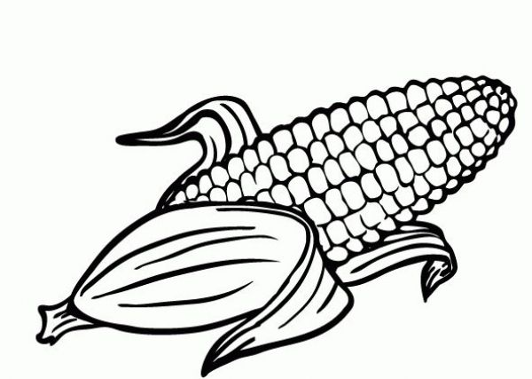 the best corn coloring sheet httpcoloringalifiahbiz