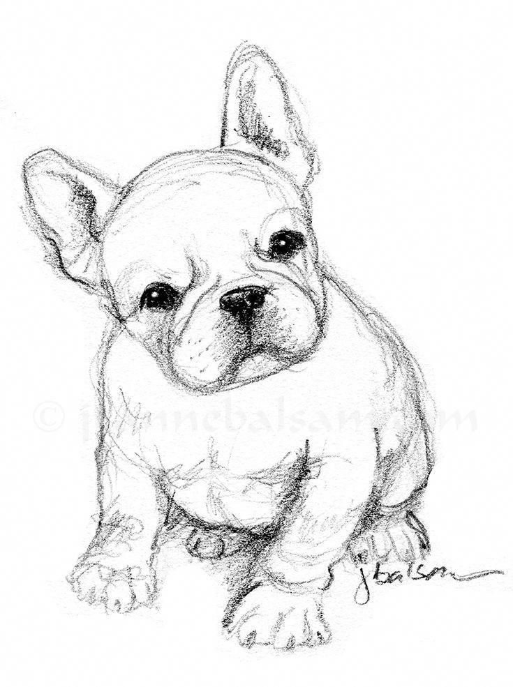 bulldog pencil dog drawing simple sketch quick french sketches puppy