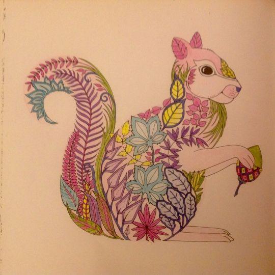 17 Best EF Squirrel Images On Pinterest