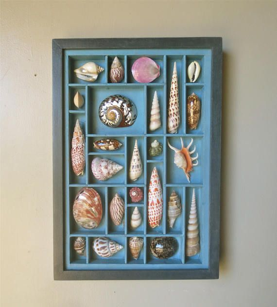 A mixed media seashell artwork that is an example of the art of cutting seashells. A section of a reclaimed wood printers type drawer or letterpress type case has been altered. Spaces are made that are not found in other type boxes. Seashells of various sizes are selected, arranged, then