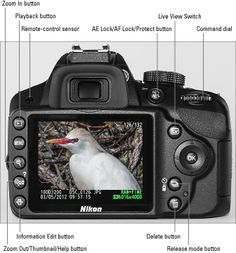 Nikon D3200 cheat sheet: To help you get started using your D3200 camera, here's a handy reference to your camera's buttons and dials and automatic and advanced exposure modes.