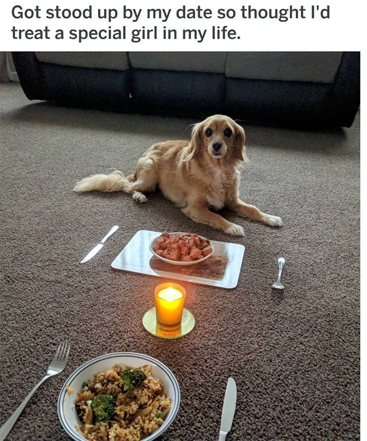 17 Dog Memes That Will Make You Lol Over And Over Again Funny Animal Pictures Funny Animals Funny Dog Memes