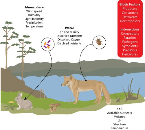 What Biotic And Abiotic Factors Interact In Natural Selection